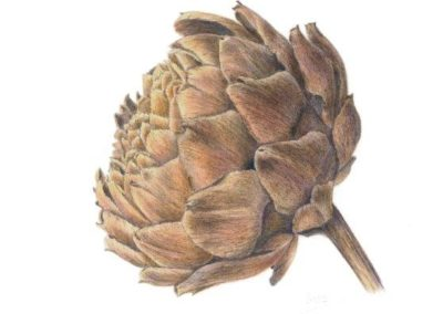 Artichoke Dried