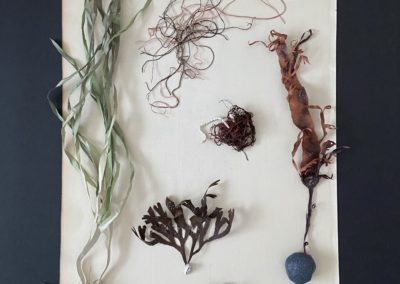 Gifts from the Salish Sea
